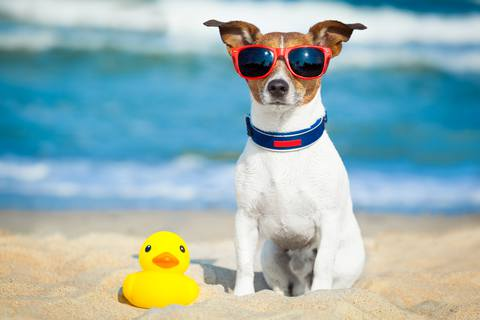summer-dog-0623.jpg.480x0_q71_crop-scale